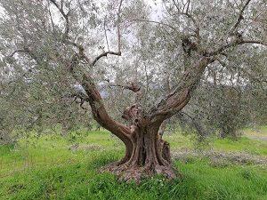 Fattoria sociale il giardino dei ciliegi 300×225 montemitro